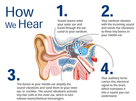 how-we-hear